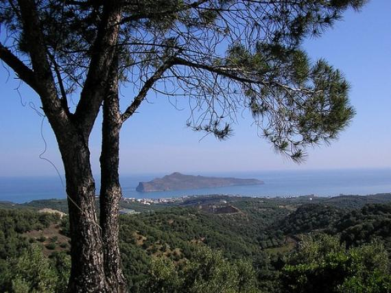 View from under the pines - Chania